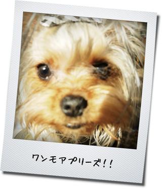 10_20130331001345.jpg