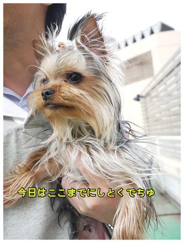 10_20130406200632.jpg