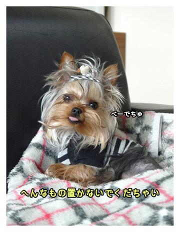 10_20130411233543.jpg