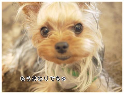 10_20130524161813.jpg