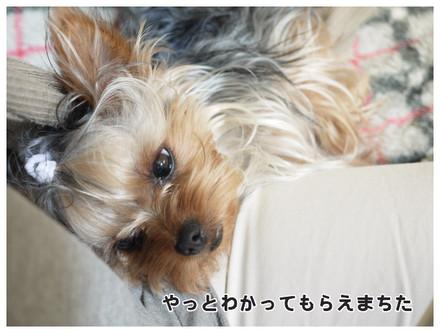 10_20130530002505.jpg