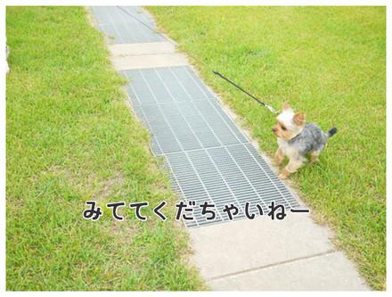 11_20130610125155.jpg
