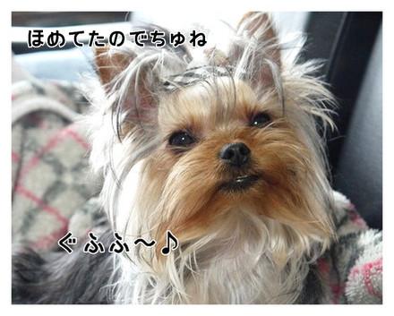 12_20130404142108.jpg