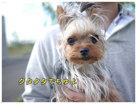 12_20130504001552.jpg