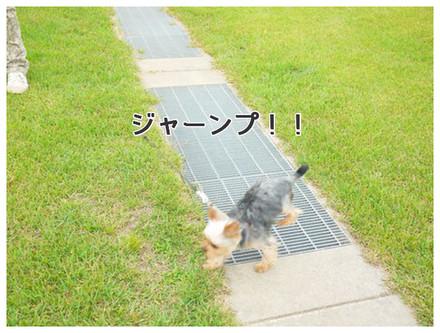 12_20130610125156.jpg