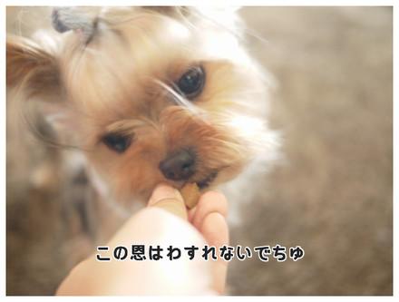 13_20130515143854.jpg