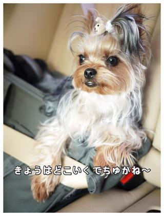 14_20130604111756.jpg