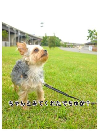 15_20130610125159.jpg