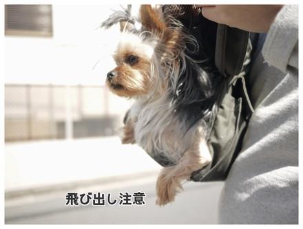 18_20130604111810.jpg