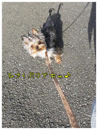 1_20130324113357.jpg