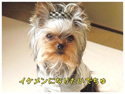 1_20130414142025.jpg