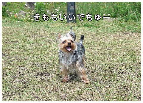 1_20130513103057.jpg
