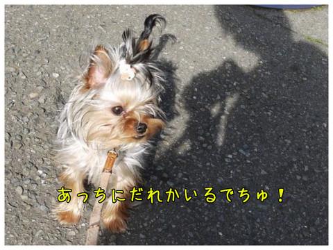 2_20130324113358.jpg