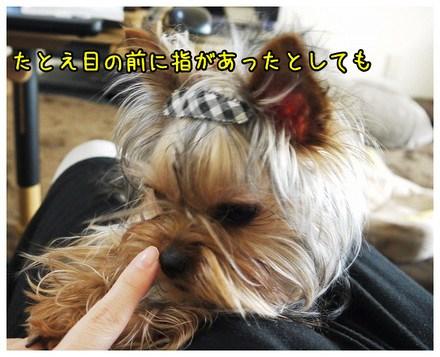 2_20130329003835.jpg