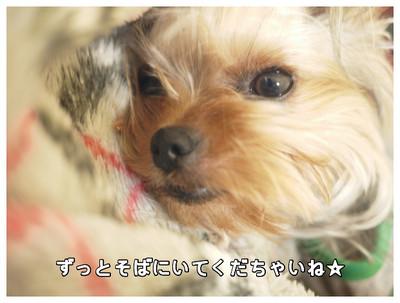 2_20130518163220.jpg