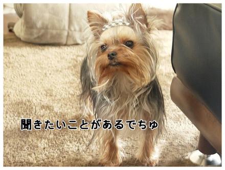 3_20130404134518.jpg