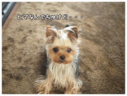 3_20130512134843.jpg