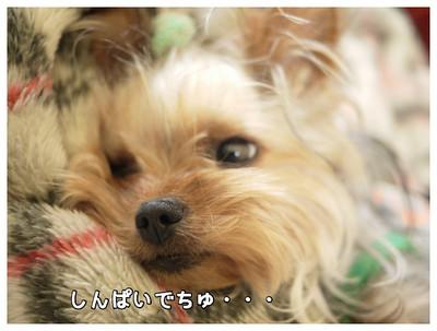 3_20130518163222.jpg