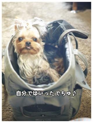 3_20130604111753.jpg