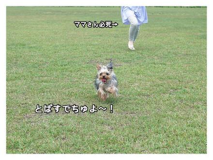 4_20130513103103.jpg