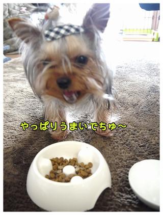 5_20130331000424.jpg