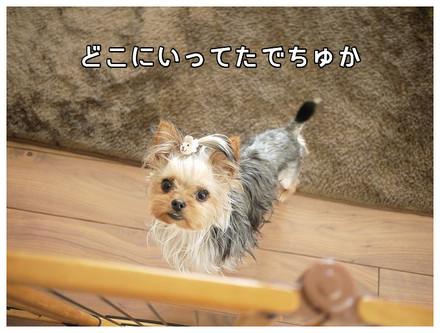 5_20130511113052.jpg