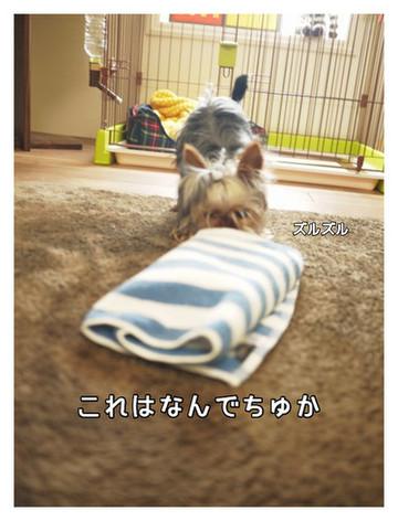 5_20130517010345.jpg