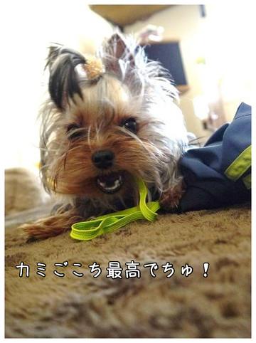 6_20130325161740.jpg
