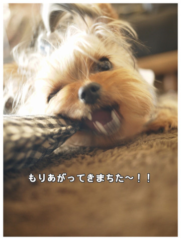 6_20130607085957.jpg