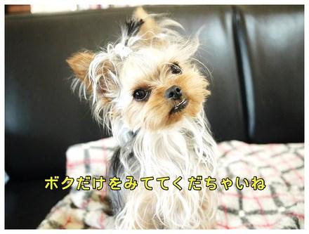 7_20130510131156.jpg