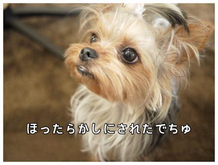 7_20130511113235.jpg