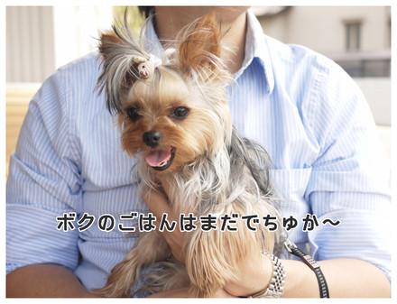 7_20130523132636.jpg