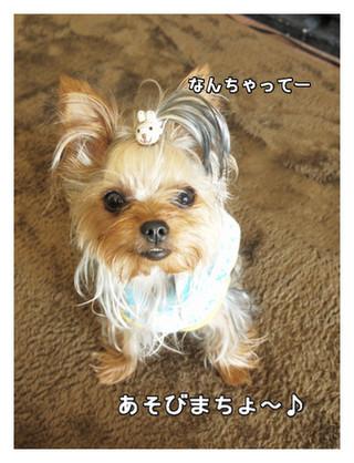 7_20130531225002.jpg