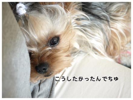 9_20130530002504.jpg