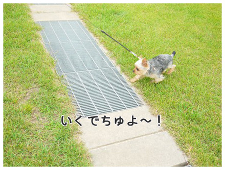 9_20130610125136.jpg