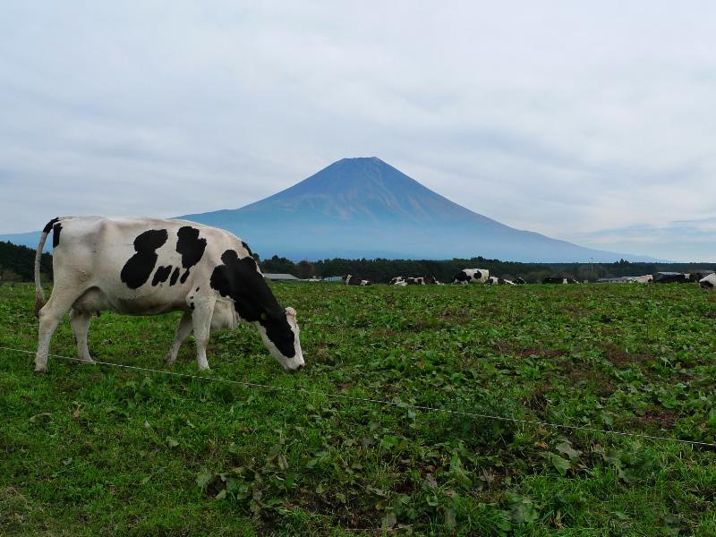 牛と富士山