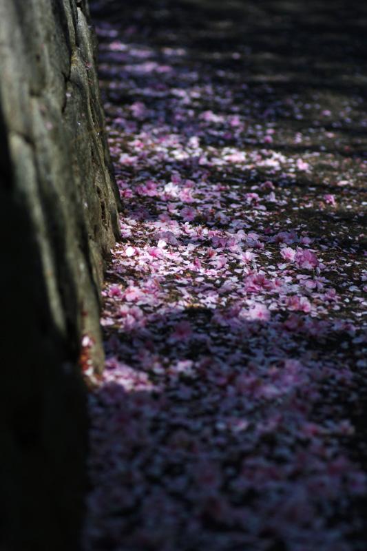 春のなごり
