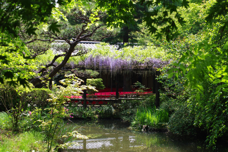 庭園の藤棚