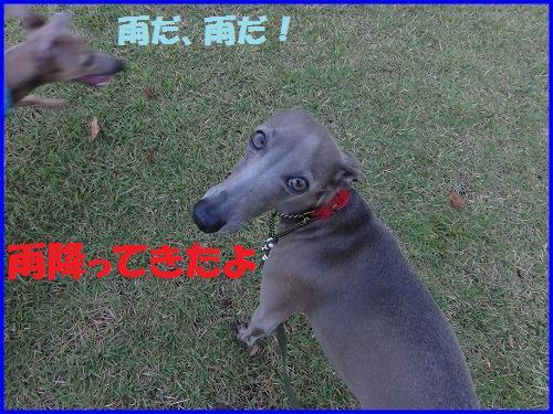 DSC00041_20100924104711.jpg
