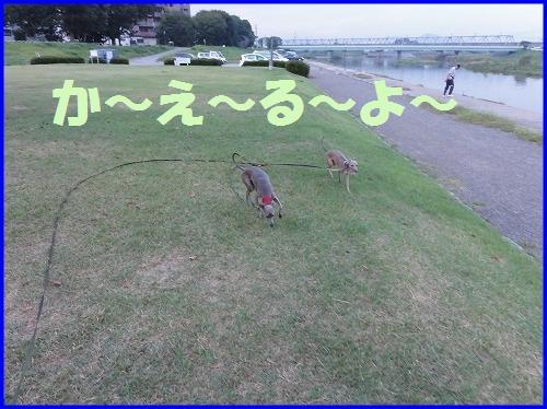 DSC00047_20100924104711.jpg