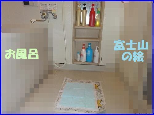 DSC08971.jpg