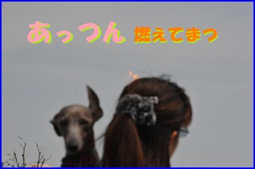 DSC_0262_20100511234032.jpg