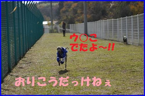 DSC_0296_20101115225811.jpg