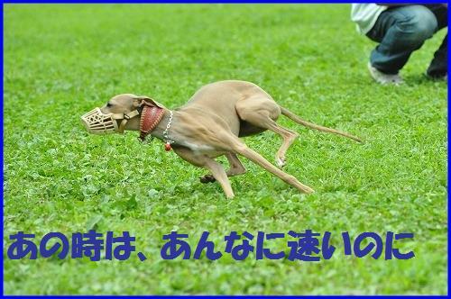 DSC_0493_20100706225128.jpg