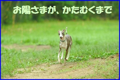DSC_0606_20100706225054.jpg