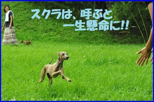 DSC_0665_20100706225126.jpg
