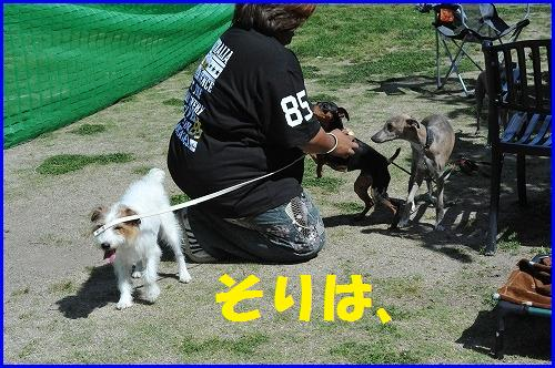 DSC_0732_20100518230720.jpg