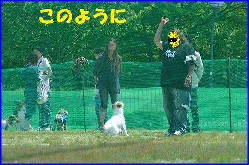 DSC_0811_20100519010322.jpg