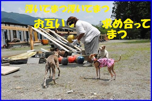 DSC_0929_20100713212912.jpg