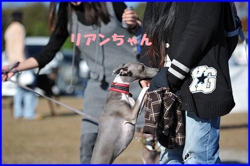 DSC_0976_20101123212951.jpg